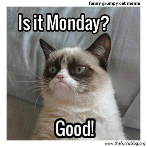 Good Grumpy Cat Meme - took the weekend off but we re back beer sports and shorts