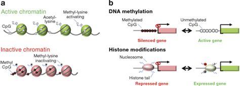 dna methylation  histone modifications dna methylation