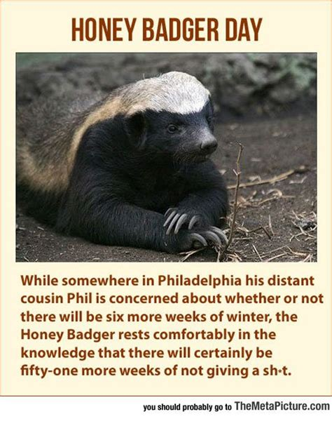 Badger Memes - 25 best ideas about honey badger meme on pinterest honey badger humor toddler quotes and