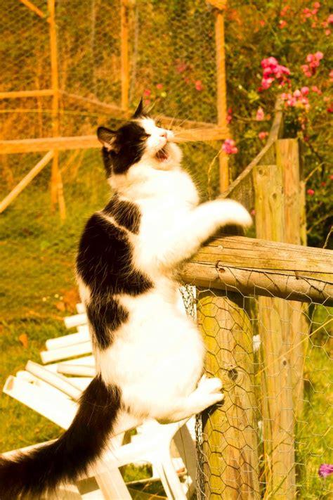 how to sedate a cat how to sedate a cat
