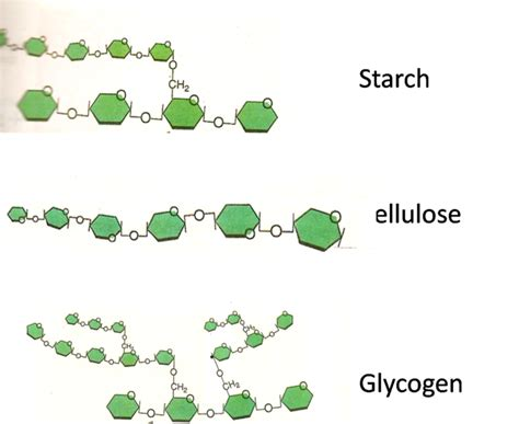 Starch Glycogen and Cellulose