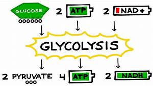 Aerobic Cellular Respiration  Glycolysis  Prep Steps