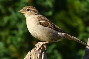 Aves - Birds - Animalia