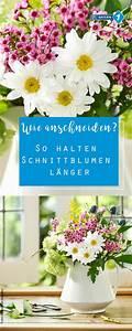 Schnittblumen Länger Frisch : blumen anschneiden so bleiben schnittblumen l nger frisch garten balkon pflanzen ~ Watch28wear.com Haus und Dekorationen