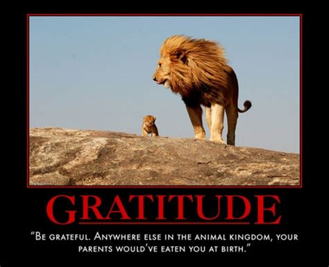 Gratitude  The Most Uplifting Quotes From Motivational