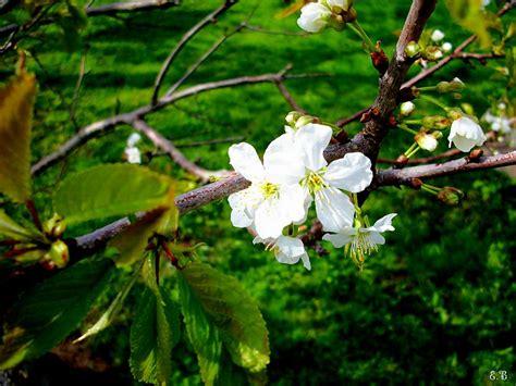 Pavasaris-Krāsās un dabā - Spoki