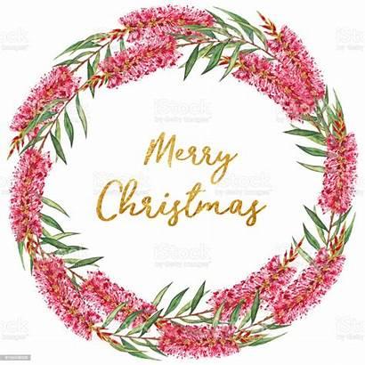 Merry Christmas Wreath Australian Flower Bottlebrush Illustration
