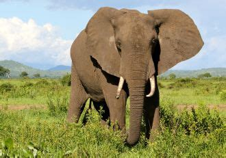 Animals in the wild | World Animal Protection USA