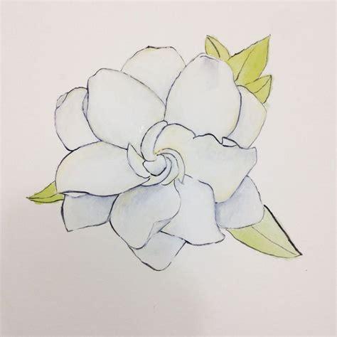 Gardenia Drawing by How To Draw Gardenia Garden Inspiration