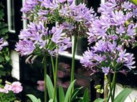 plants that come back every year 101 best quot perennials quot plants that come back every year images on pinterest pot plants