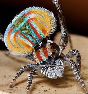 Faire Fuir Les Araignées : les araign es des petites b tes mignonnes paperblog ~ Melissatoandfro.com Idées de Décoration
