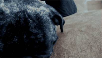 Want Bed Dogs Sleepy Don Gifs Barkpost