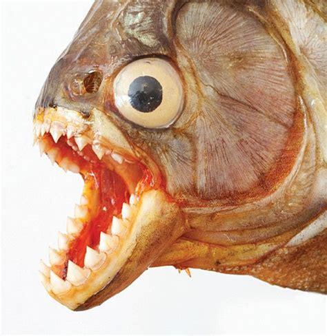 minecraft ugly animals   neurosurgery