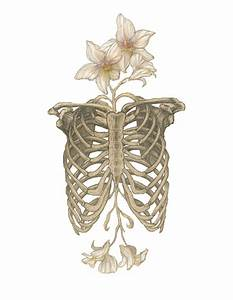 transparent skeleton | Tumblr