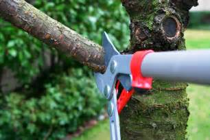 3 safety tips to remember while trimming your trees themocracy