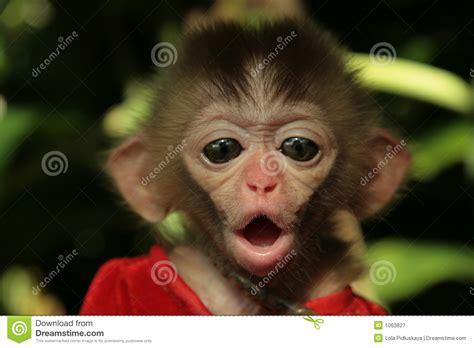 monkeys baby royalty  stock photography image