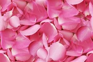 Rose Petals Seamless Backgrounds