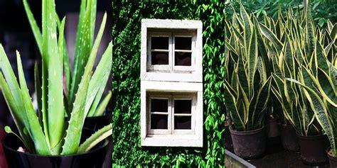 plante pour chambre à coucher voici 6 plantes à mettre absolument dans votre chambre à