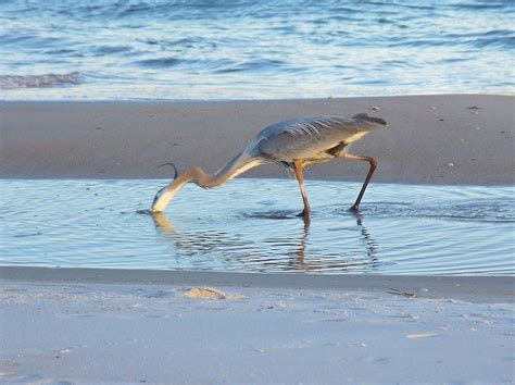 fishing george island st florida surf panhandle heron state park fish rv hubpages parks gulf mexico bird found tips catching
