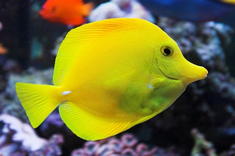 saltwater fish pets that seem easy to keep but aren t