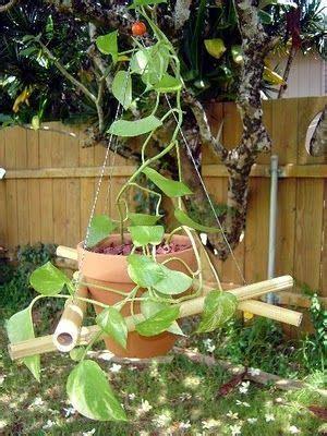 diy plant hanger   bamboo poles