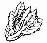 Lettuce Coloring خس Leaf Printable Pages Clip Khas Khaa Printablecolouringpages sketch template