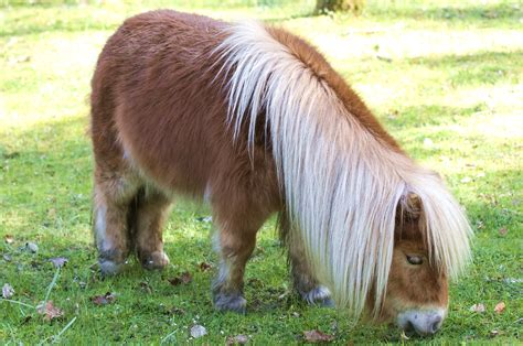 pony shetland ponies lessons findingourwaynow story well