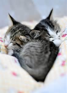 Heart Shape Kittens Sleeping