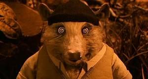 Mr Fox : kylie fantastic mr fox wiki ~ Eleganceandgraceweddings.com Haus und Dekorationen