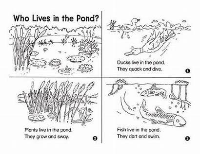 Pond Animals Kindergarten Habitat Plants Bed Science
