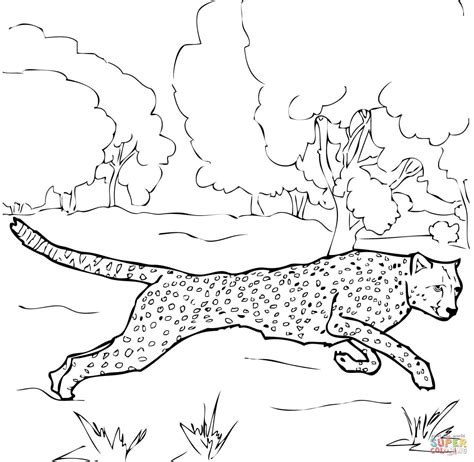 cheetah coloring pages running cheetah coloring page free printable coloring pages