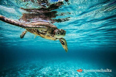 Top 25 Sea Turtle Photos  Underwater Gallery
