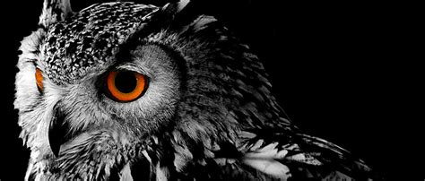 Background Owl Wallpapers by Owl Background Owl Bird Background Image For Free