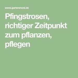 Pflege Von Pfingstrosen : pfingstrosen richtiger zeitpunkt zum pflanzen pflegen ~ A.2002-acura-tl-radio.info Haus und Dekorationen