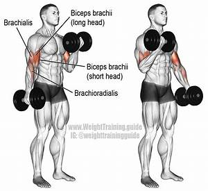 Dumbbell Curl Exercise Instructions And Video