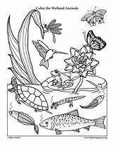 Coloring Wetland Animals Habitats Science Nature Pages Smiling Animal Sheets Desert Earth Preschool Colouring Food Printables Exploringnature Physical Rainforest Fish sketch template