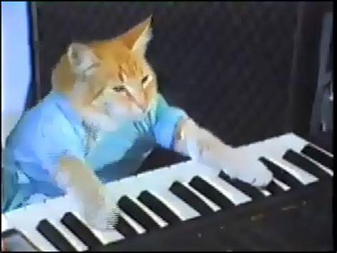 cat piano no for the cool keyboard player