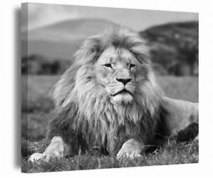 Schwarz Weiß Bilder Tiere : l we leinwand schwarz wei bilder tiere natur wildnis afrika aufgespannt 9a209 leinwandbilder ~ Markanthonyermac.com Haus und Dekorationen