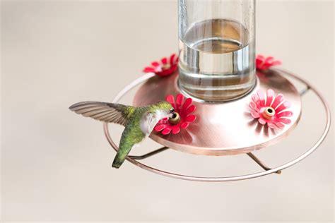 top 10 hummingbird nectar mistakes