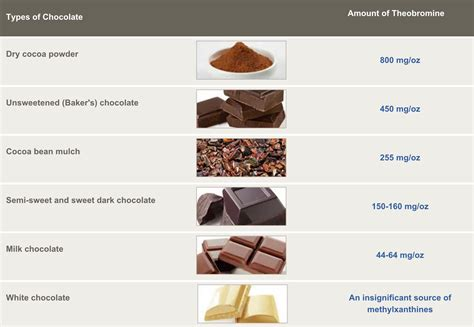 types of chocolate is chocolate bad for dogs what about cats find out now