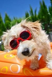 Hunde Pool Bauen : hund pool worauf man beim kauf eines hundepools achten sollte ~ Frokenaadalensverden.com Haus und Dekorationen