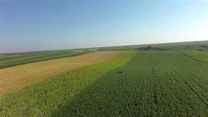 Corn Field And Sky With Clouds .Aerial View Stock Footage ...