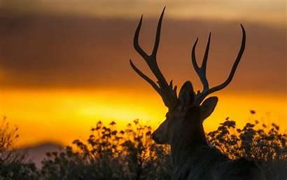 Deer Sunset Amazing Animal Backgrounds Desktop Wallpapers