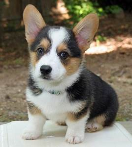 Top 20 Cutest Dog Breeds around the World ...