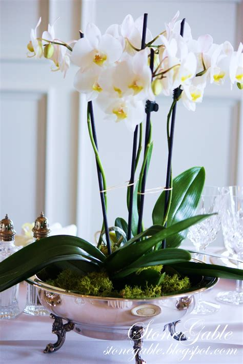 China Orchids And Open House Stonegable