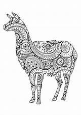 Llama Coloring Lama Zentangle Paisley Patterns Lamas Animal Erwachsene Colorear Mandalas Llamas Coloriage Shape Adult Simple Colorare Motifs Avec Malbuch sketch template
