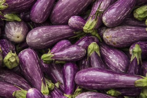 cuisiner de l aubergine aubergines le b a ba