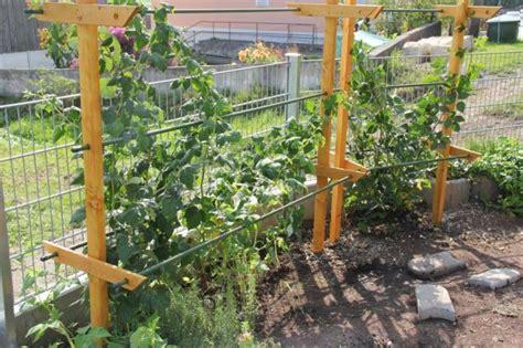 himbeerspalier selber bauen die besten 25 himbeeren pflanzen ideen auf obstb 228 ume pflanzen landgarten und