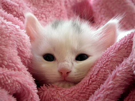 photo kitten cat fluffy cat cute  image