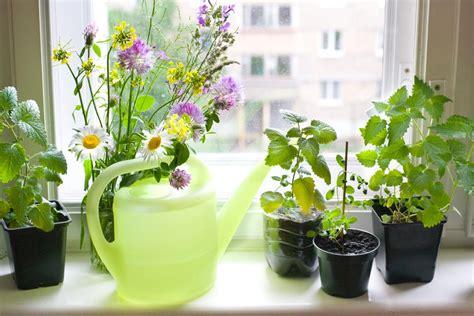 Windowsill Herb Garden by How To Grow A Windowsill Herb Garden My Uncommon Slice